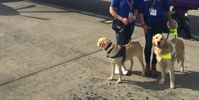 Assistance dogs